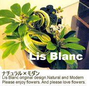 花LIFE・・・Lis Blanc