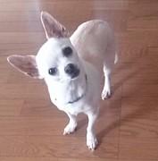 さくら【愛犬】