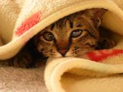 静岡県西部 迷子犬猫情報