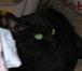 画材で猫チャリティー