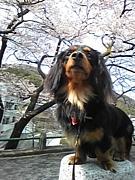 ダックスの友達作ろぅin広島