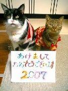 私は猫を愛することを誓います!