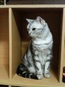 猫の笑顔 (≡ ̄ー ̄≡)ニヤ