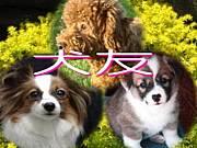 犬友 in 戸田・蕨・川口