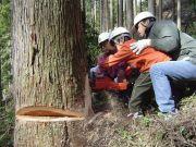 親子で伐採体験しよう!