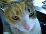 猫ネコCLUB