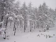 長野雪山愛好会