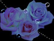 Bio Gel専門サロン blue rose