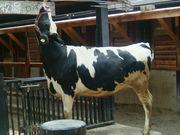九州大学農学部畜産学分野