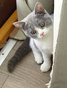 札幌猫カフェ・福猫茶房