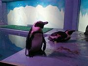 ペンギンBARフェアリー