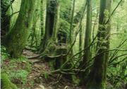屋久島に行きたい人