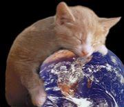 ミクシィの写真が猫。