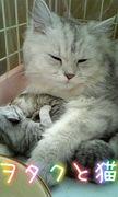 ヲタクと猫