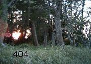 404 -not found-