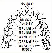 日本大学松戸歯学部第41期生