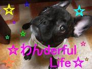 ☆わんderful  Life☆