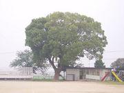 嬉野町立 豊田小学校