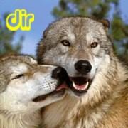 [dir]オオカミ・狼・wolf