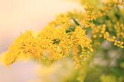 *野の花が好き*