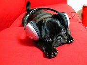 ♪あなたに聴かせたい音楽♪