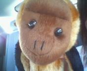 この猿、なんかかわいいv