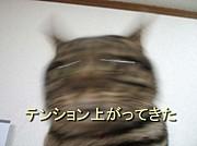 【姫】ぬこちん【降臨】