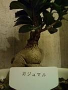 Smile cafe Roots〜特攻隊〜