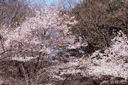 花祭りの環(4月8日に生まれた花)