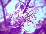 お花見(公式)