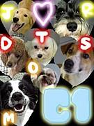 ビジカレ★犬トレーナー★C1