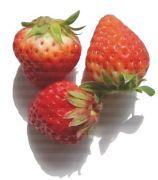 ♪恋する苺同盟♪