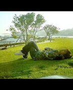 水辺の森〜レクリエーション部〜