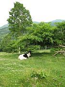 放牧研究会+アニマルセラピー