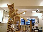 猫カフェ「Nyafe Melange」
