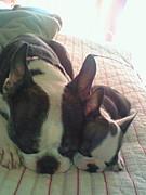 KYOTO DOGGS (京都の犬仲間)