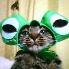 カエルネコ