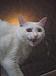 Katze(英文科限定サークル)