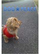 DOG★PEACE