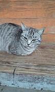 東広島のネコ好き