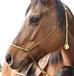 ヒポセラピー・乗馬