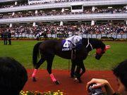 競馬2008年7歳世代が大好き!