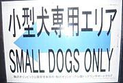 駒沢公園ドッグラン小型犬エリア