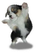 犬猫&ヒトの健康について