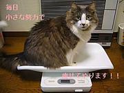 ★妊婦&産後ママのダイエット★
