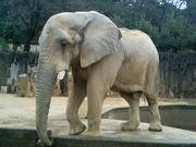 動物園セラピー