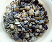 砂抜き中の貝が可愛い