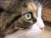 猫と会いたい♪