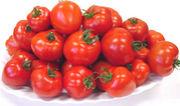 トマトTOMAOTOずき集まれー