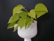 癒しの観葉植物。。。